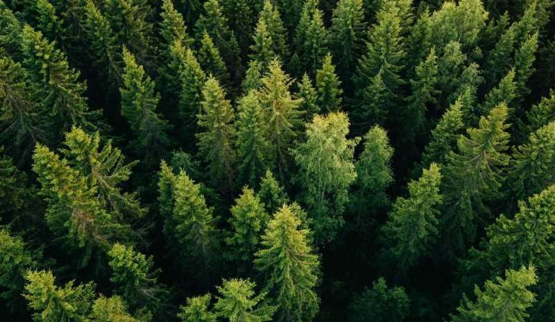 Scaling up efforts to restore forests