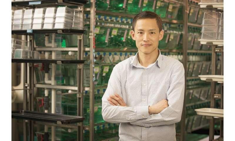 Scientists at MDI Biological Laboratory identify new genetic regulators of regeneration