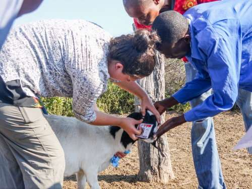 Scientists grapple with worms to improve co-existence with wildlife in Africa