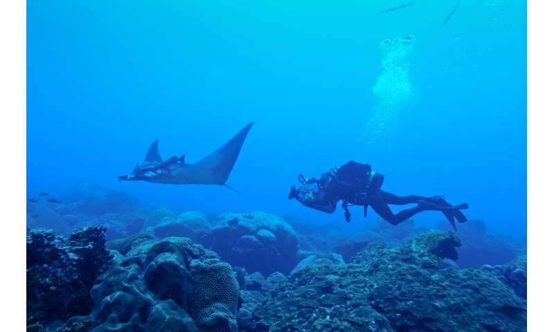 Scripps graduate student discovers world's first known manta ray nursery