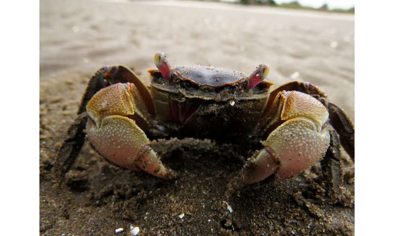 Seeing through the eyes of a crab