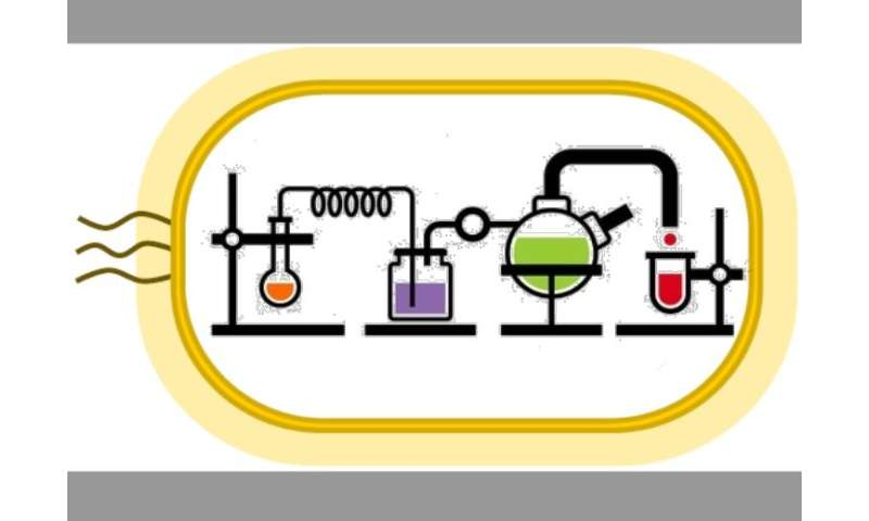Self-sustaining loop of chemical reactions could revolutionize drug production