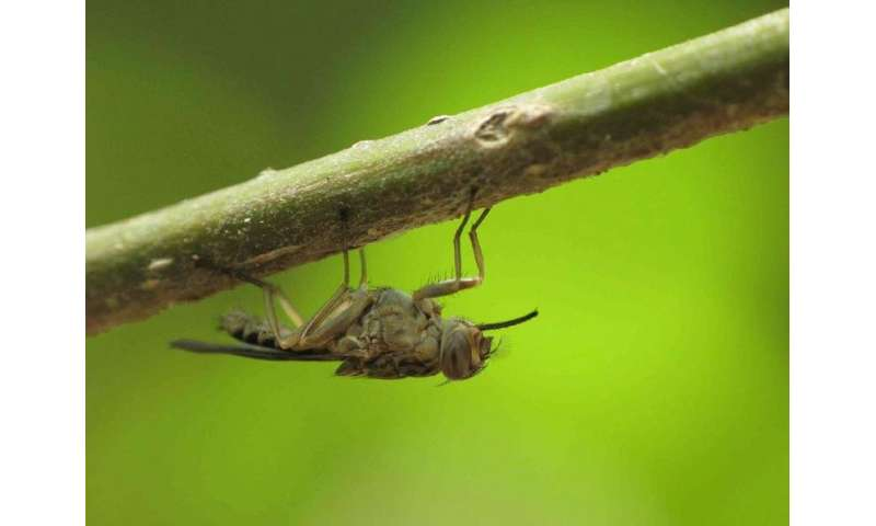 The eradication of the tsetse fly will boost the livestock sector in