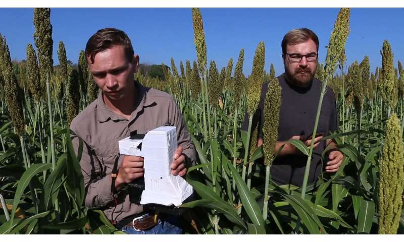 Sensor gives farmers more accurate read on plant health, provides valuable crop data