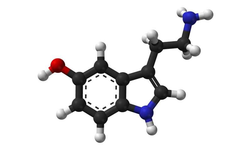 Image result for Serotonin