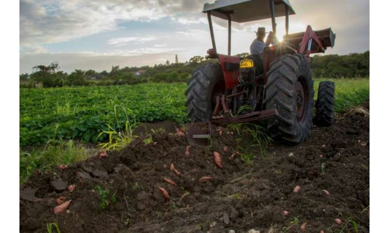 Small farms in the Antilles need support