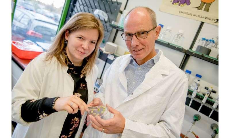 Small RNA renders bacteria more resistant to antibiotics