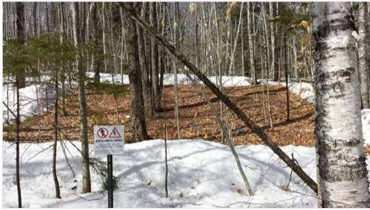 Snowpack declines may stunt tree growth and forests' ability to store carbon emissions