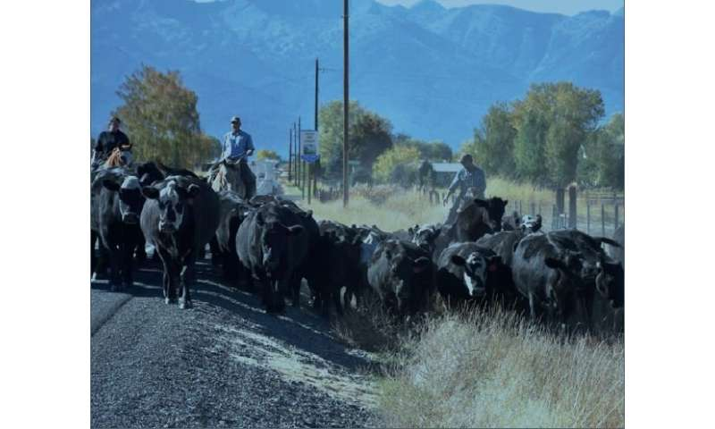 Socioecological network finds space for cattle, fish, and people in the big mountain west