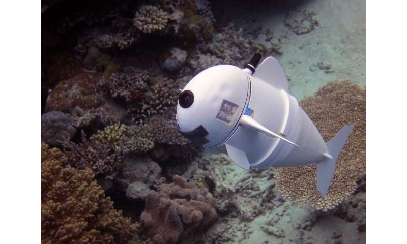 Soft robotic fish swims alongside real ones in coral reefs