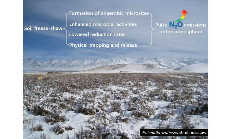 Soil freeze-thaw stimulates nitrous oxide emissions from alpine meadows