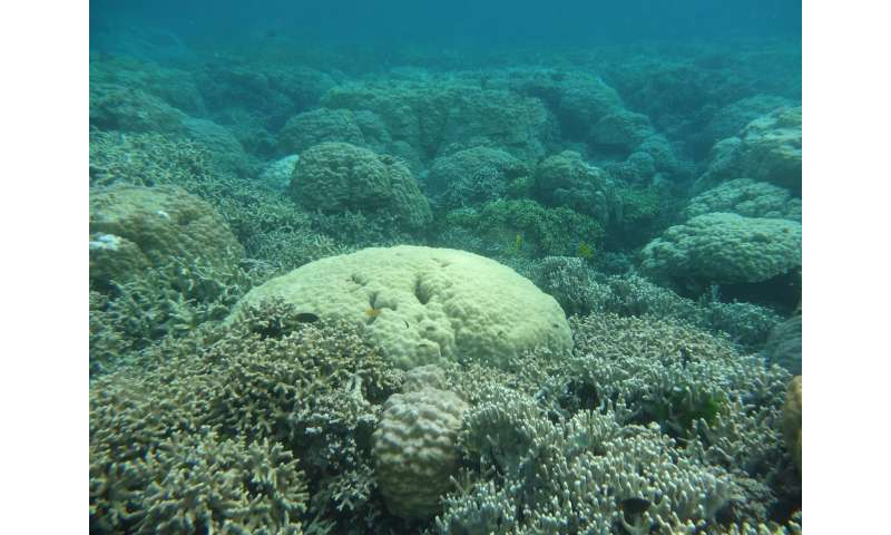 Some Coral Reefs Keep Up with Sea-Level Rise, Research Finds