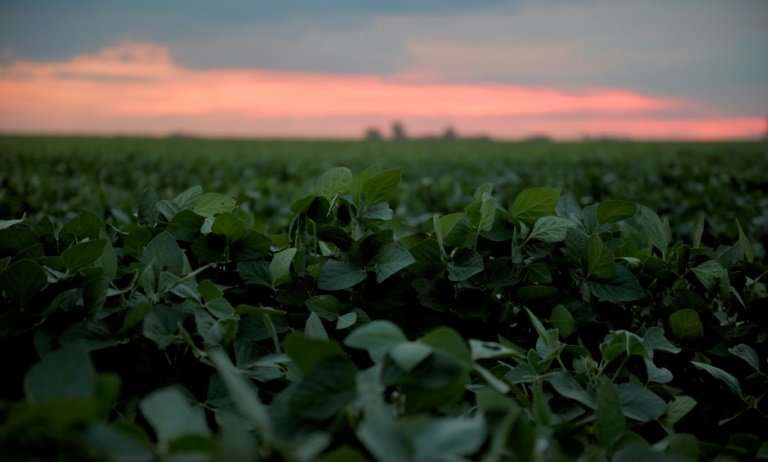 "Soybean fields in Brazil and other South American countries are often fumigated with glyphosate, a herbicide which is ""prob"
