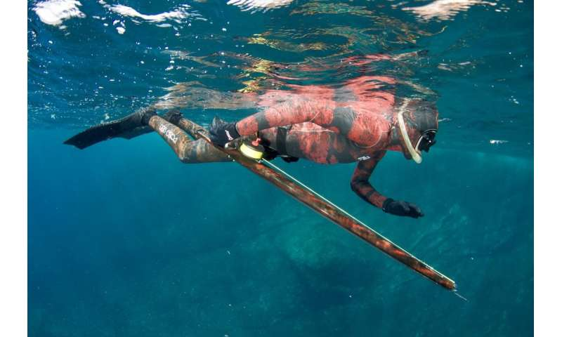 Spearfishing makes fishes more timid