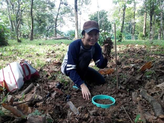Species and age of trees affect carbon emissions