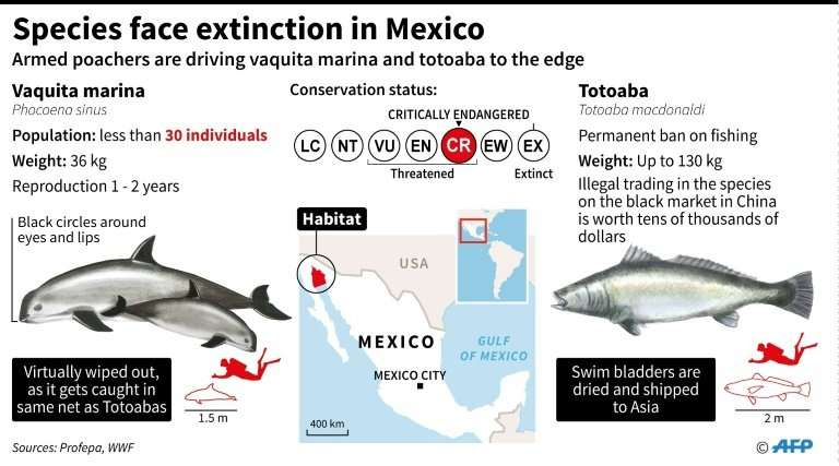 Species of the sea face extinction in Mexico