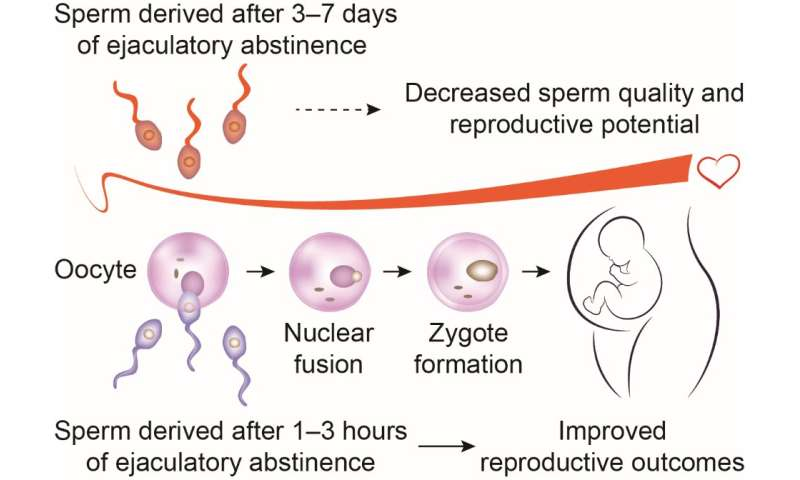 Abstinence and sperm