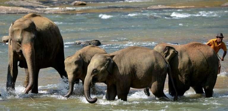 Sri Lanka plans more electric fences to ward off marauding elephants