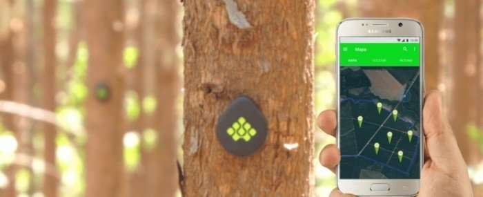 Startup innovates by developing IoT technology for forestry sector