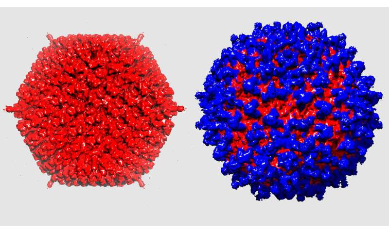 Stealth virus for cancer therapy