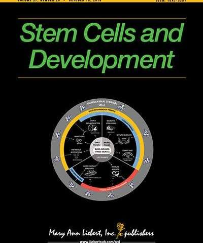 Stem cells can differentiate into neurons and may be useful post-stroke therapeutics