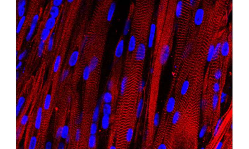 Stem cells control their own fate, making lab-grown tissues less effective