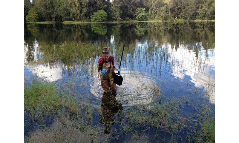 Stormwater ponds not a major source of greenhouse gas emissions