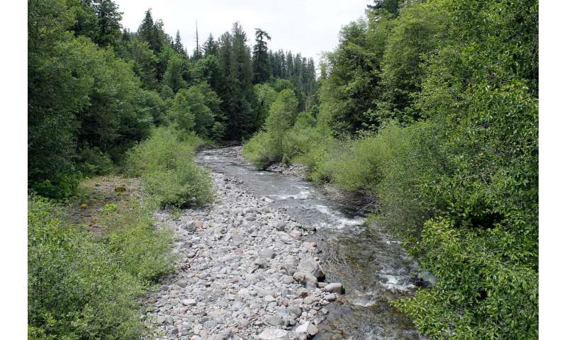 Streams may emit more carbon dioxide in a warmer climate
