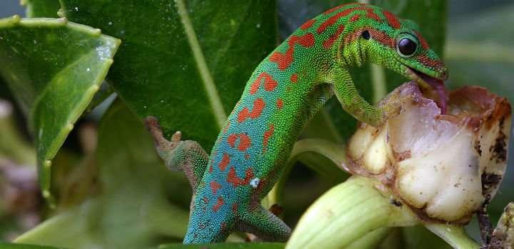 Study highlights importance of vertebrate pollinators