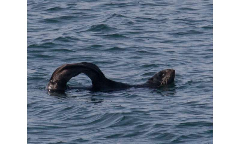 Study of sleeping fur seals provides insight into the function of REM sleep