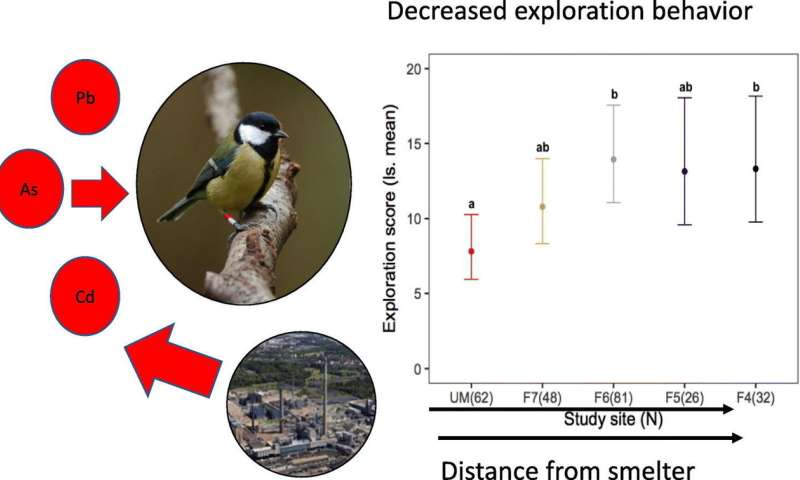 Study results suggest wild birds suffer personality disorders due to ingestion of heavy metals