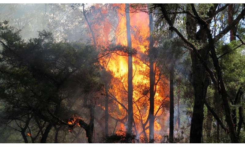Study shows gully wildlife refuges have high bushfire risk