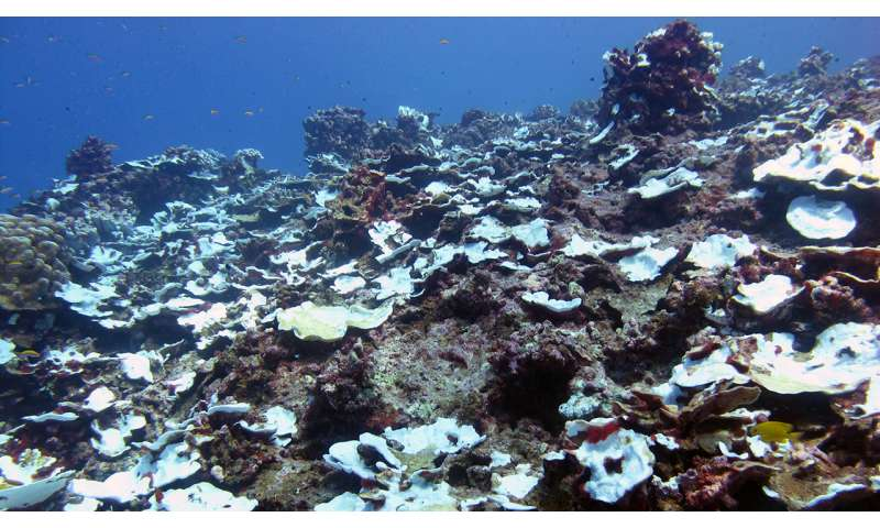 Study observes severe pale bleaching events on a Pacific coral reef over the past century