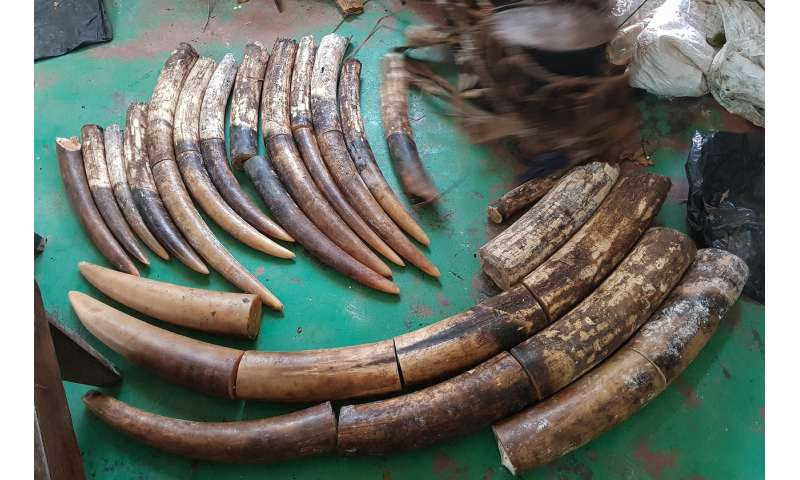 Successful anti-poaching operation leads to five-year conviction for three poachers in Republic of Congo