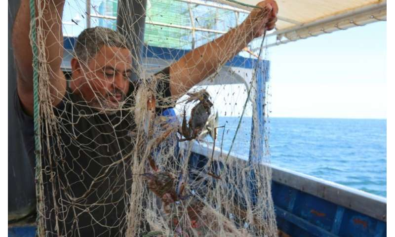"Such was the havoc the blue crab brought to Tunisian fishermen's catches, they nicknamed it ""Daesh"" after Islamic Stat"