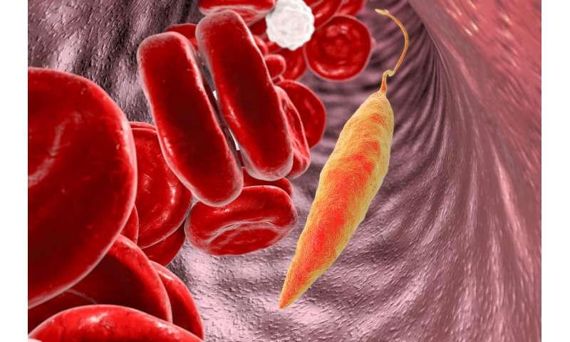 Sugar withdrawal—killing the leishmania parasite