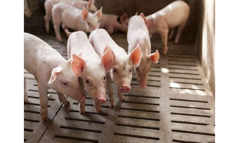 'Superbugs' found in vast majority of U.S. supermarket meat
