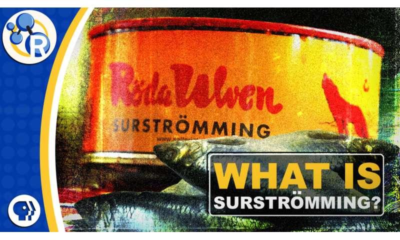 Surströmming: The secrets of this stinky Swedish fish (video)