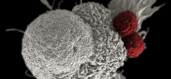 Synthetic biology approaches to improving immunotherapy