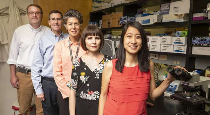 Team explores diabetes drug's ability to treat RSV infection