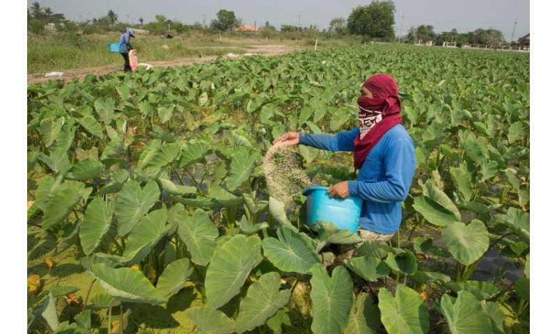 Thailand decided that reports of health and environmental hazards were not serious enough to merit a full ban of paraquat and tw