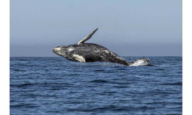 "The 89-nation member International Whaling Commission has passed the non-binding  ""Florianopolis Declaration"" - an agr"