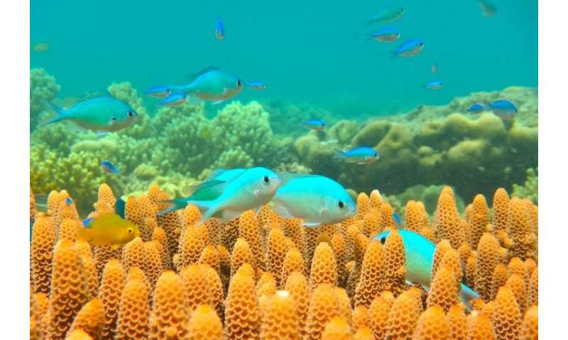 The Australian government is offering funding to research ways to protect the Great Barrier Reef after repeated bleaching episod