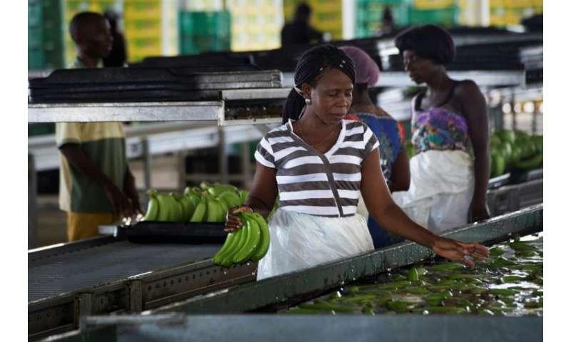 La compañía espera duplicar la producción a 170,000 toneladas por año y establecer una base en el lucrativo mercado sudafricano.