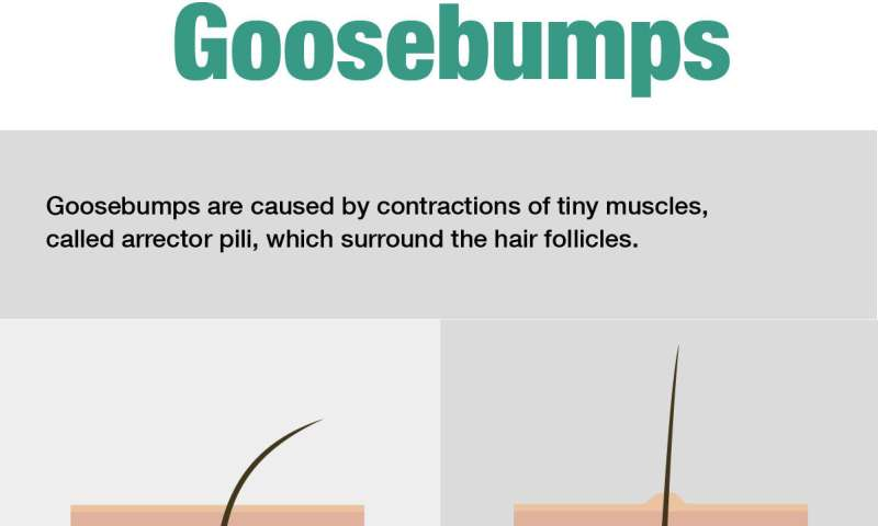 The curious case of the people who can control their goosebumps