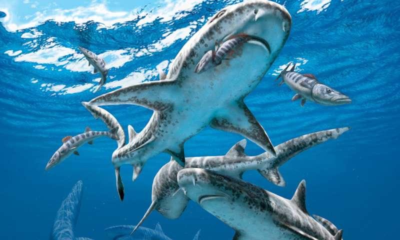 The end-Cretaceous extinction unleashed modern shark diversity