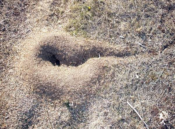 The engineering work of ants can influence paleoclimatic studies