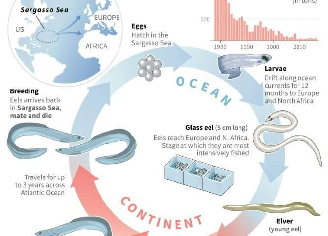 The epic life cycle of the European eel