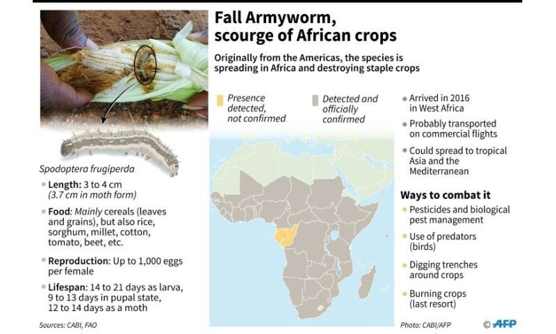 The life cycle of Spodoptera frugiperda is only about six weeks, but it packs an outsized punch