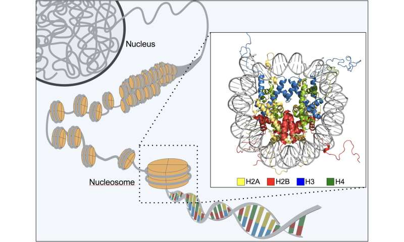 The nanoscopic structure that locks up our genes